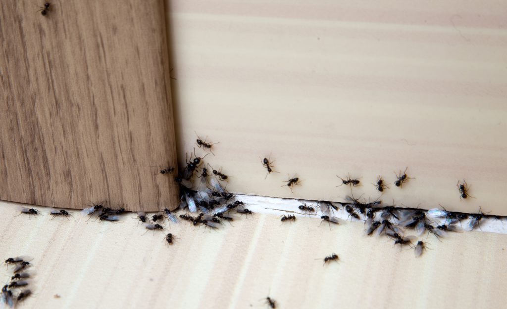 ant removal specialists