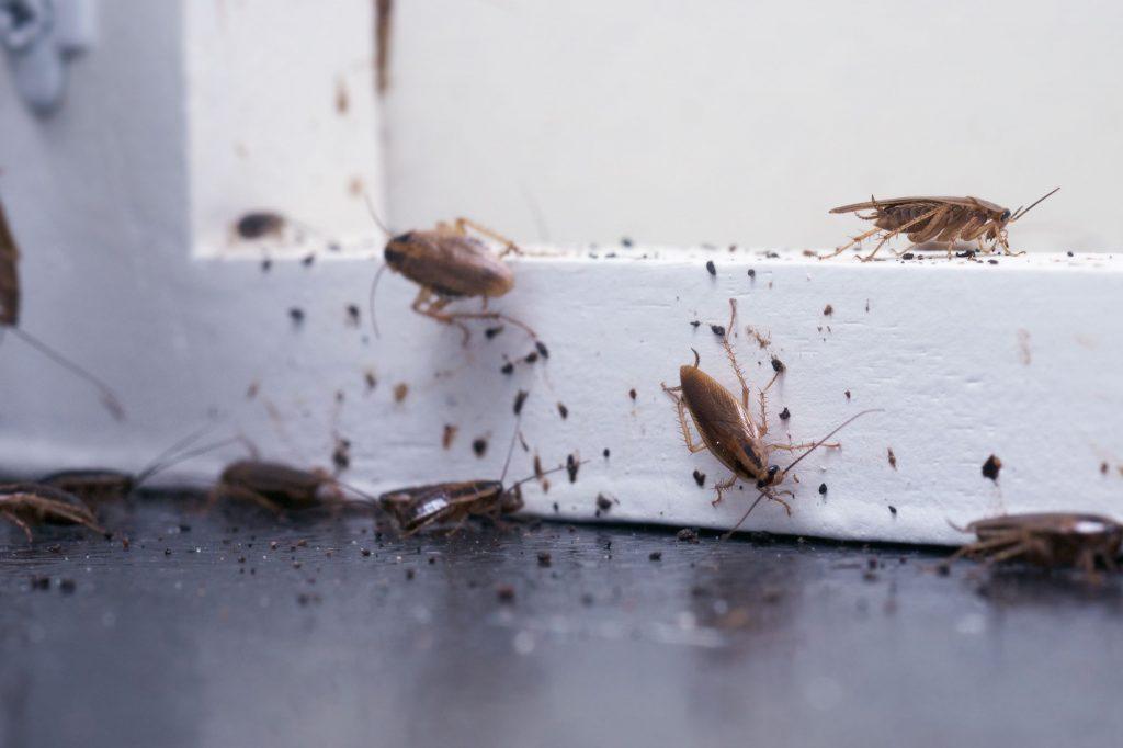 roach removal company
