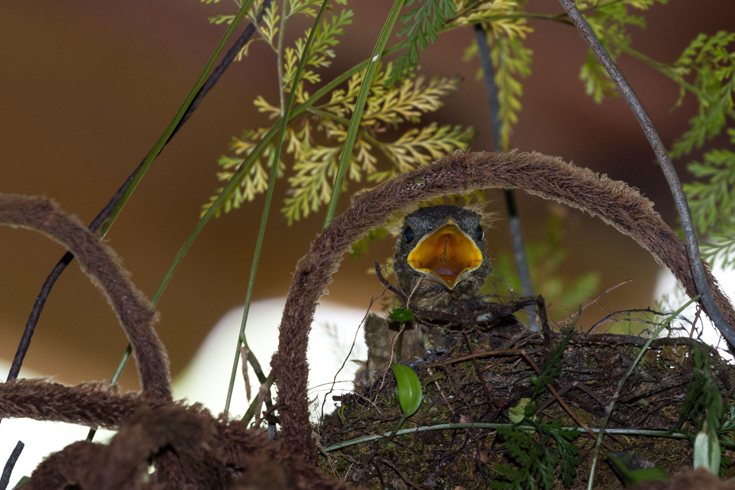 bird infestation
