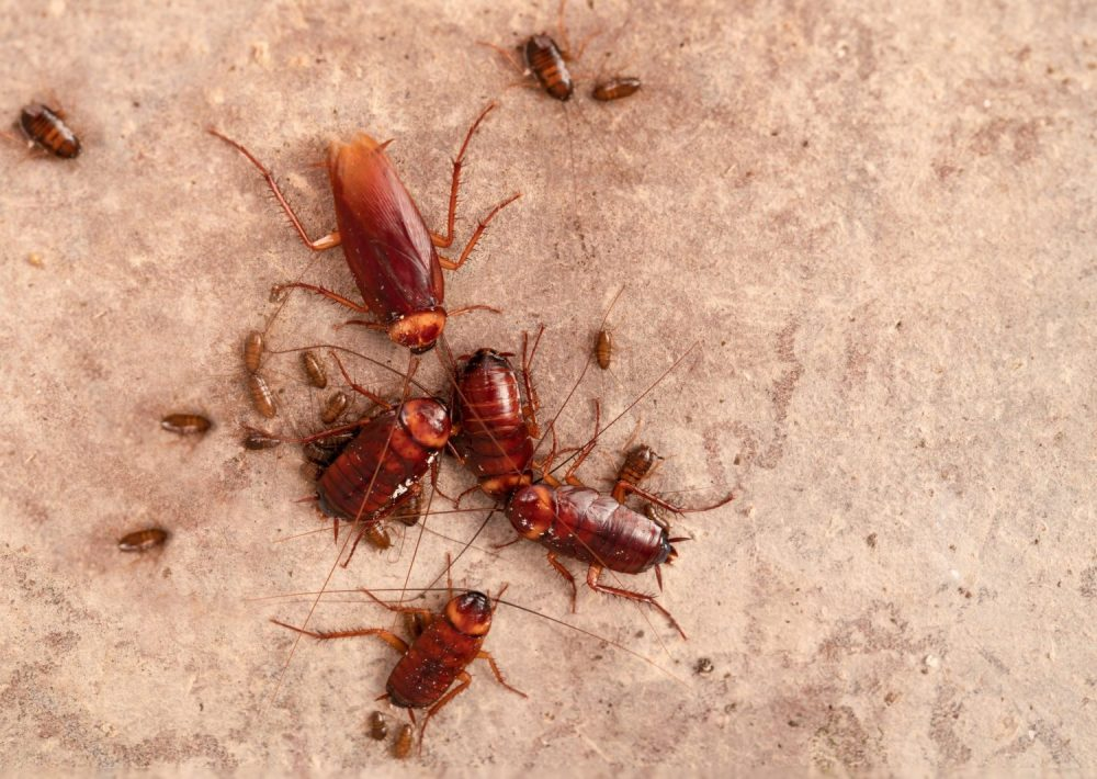roach control company
