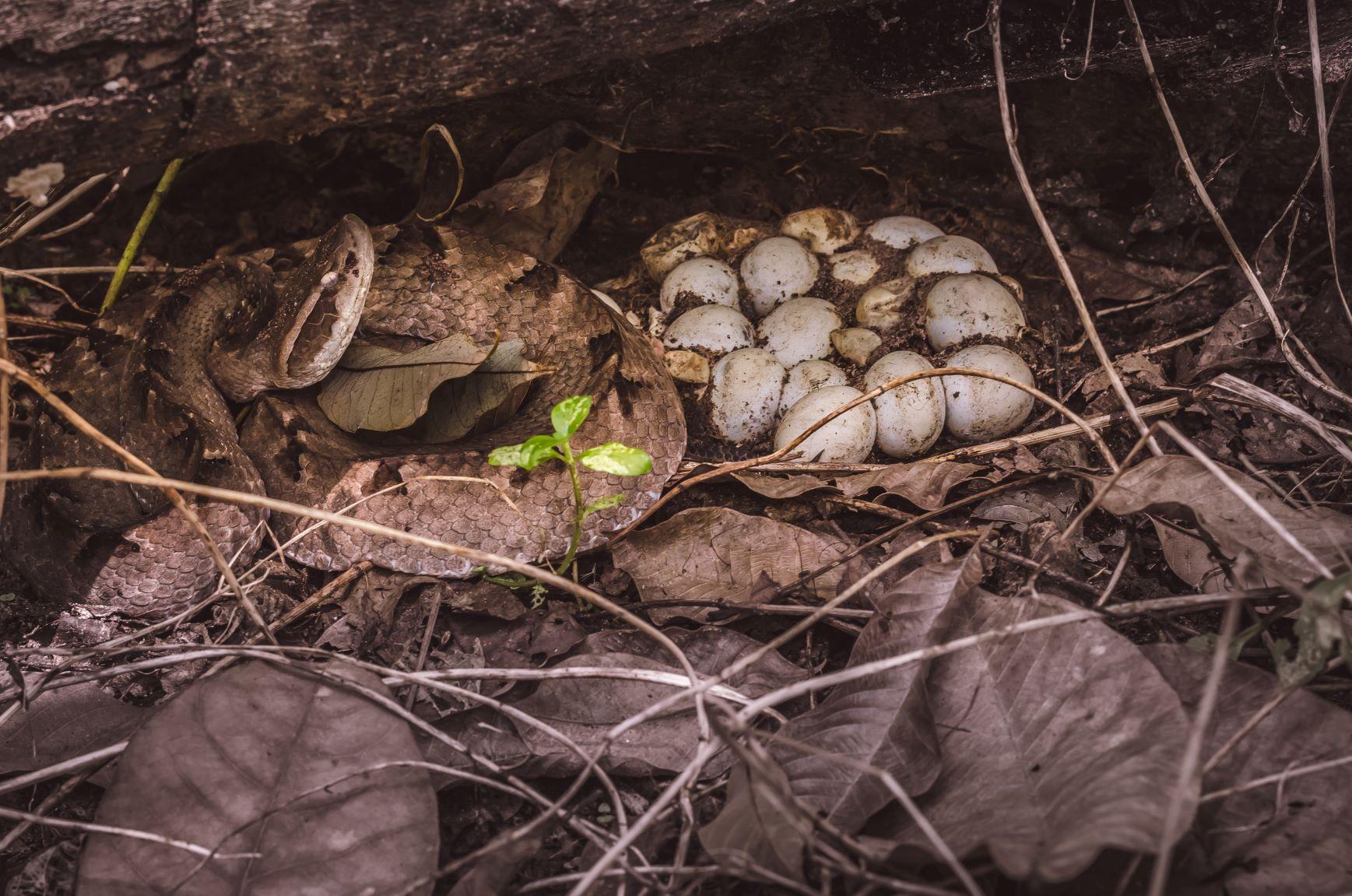 snake infestation